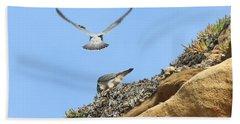 Peregrine Falcons - 2 Beach Sheet