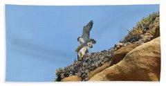Peregrine Falcons - 3 Beach Towel