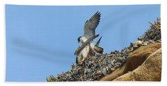 Peregrine Falcons - 5 Beach Sheet