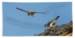 Peregrine Falcons - 6  Beach Sheet