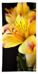 Peruvian Lily Beach Sheet by Deb Halloran