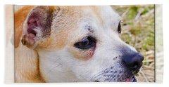 Pets Beach Sheet