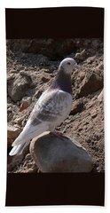 Pigeon Beach Sheet