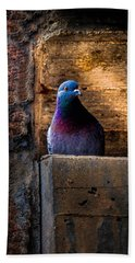 Pigeon Of The City Beach Towel by Bob Orsillo