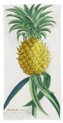 Pineapple Engraved By Johann Jakob Haid Beach Towel