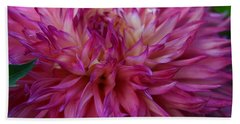 Beach Towel featuring the photograph Pink And White Dahlia  by Denyse Duhaime