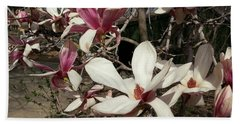 Beach Towel featuring the photograph Pink And White Spring Magnolia by Caryl J Bohn
