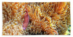 Pink Anemonefish, Chumphon Pinnacle, Ko Beach Towel