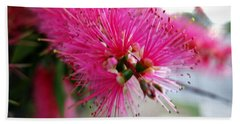 Beach Towel featuring the photograph Pink Bottlebrush Flower - Within Border by Leanne Seymour