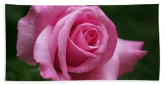 Pink Rose Perfection Beach Towel
