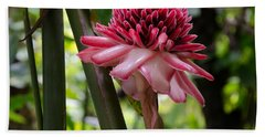 Pink Torch Ginger Beach Sheet
