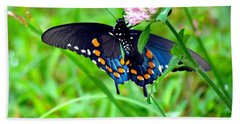 Pipevine Swallowtail Hanging On Beach Sheet