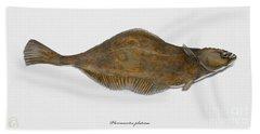 Plaice Pleuronectes Platessa - Flat Fish Pleuronectiformes - Carrelet Plie - Solla - Punakampela Beach Towel