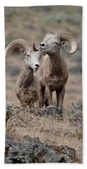 Beach Towel featuring the photograph Playfull Rams by Athena Mckinzie