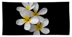 Beach Towel featuring the photograph Plumerias Isolated On Black Background by David Millenheft