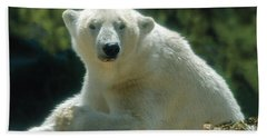 Polar Bear Portrait Beach Sheet