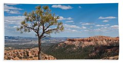 Beach Towel featuring the photograph Ponderosa Pine Tree Clinging To Life On Canyon Rim by Jeff Goulden