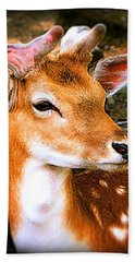Portrait Male Fallow Deer Beach Towel