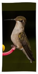 Portrait Of A Hummingbird Beach Towel