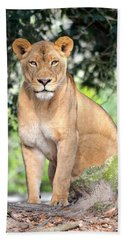 Portrait Of A Proud Lioness Beach Sheet