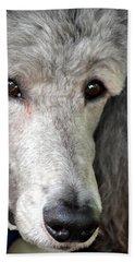 Portrait Of A Silver Poodle Beach Towel
