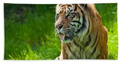 Beach Towel featuring the photograph Portrait Of A Sumatran Tiger by Jeff Goulden