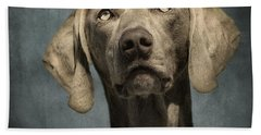 Weimaraner Beach Towels