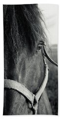 Portrait Of Horse In Black And White Beach Sheet