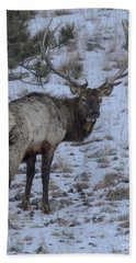 Elk Bull In Wind Cave National Park Beach Sheet