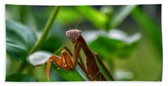 Beach Towel featuring the photograph Praying Mantis by Thomas Woolworth