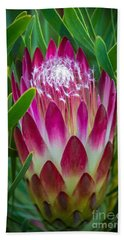 Protea In Pink Beach Towel by Kate Brown
