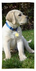 Proud Yellow Labrador Puppy Beach Towel
