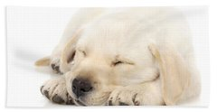 Puppy Sleeping On Paws Beach Towel