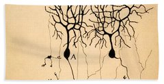 Purkinje Cells By Cajal 1899 Beach Towel