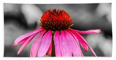 Purple Coneflower - Sc Beach Sheet