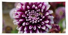 Purple Dahlia White Tips Beach Sheet