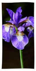 Purple Iris Beach Towel by Adam Romanowicz