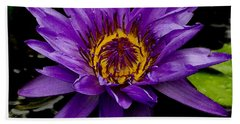 Beach Towel featuring the photograph Purple Lotus Water Lilies by James C Thomas