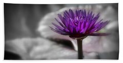 Purple Pond Lily Beach Towel