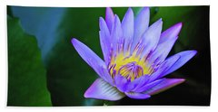 Purple Water Lily Beach Sheet