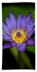Purple Water Lily Beach Towel by Pamela Walton