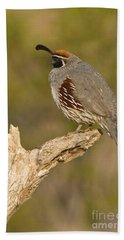 Beach Towel featuring the photograph Quail On A Stick by Bryan Keil