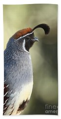 Quail Portrait Beach Towel by Bryan Keil