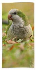 Quaker Parrot #3 Beach Towel