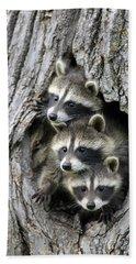 Raccoon Trio At Den Minnesota Beach Towel