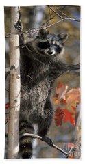 Racoon In Tree Beach Towel