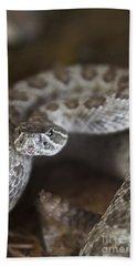 A Rattlesnake Thats Ready To Strike Beach Towel