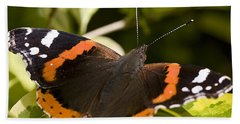 Red Admiral Butterfly Beach Sheet by Richard Thomas
