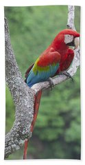 Red And Green Macaw Pantanal Brazil Beach Towel