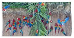 Red-and-green Macaws At Clay Lick Beach Towel